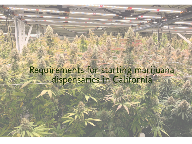 Requirements for starting marijuana dispensaries in California