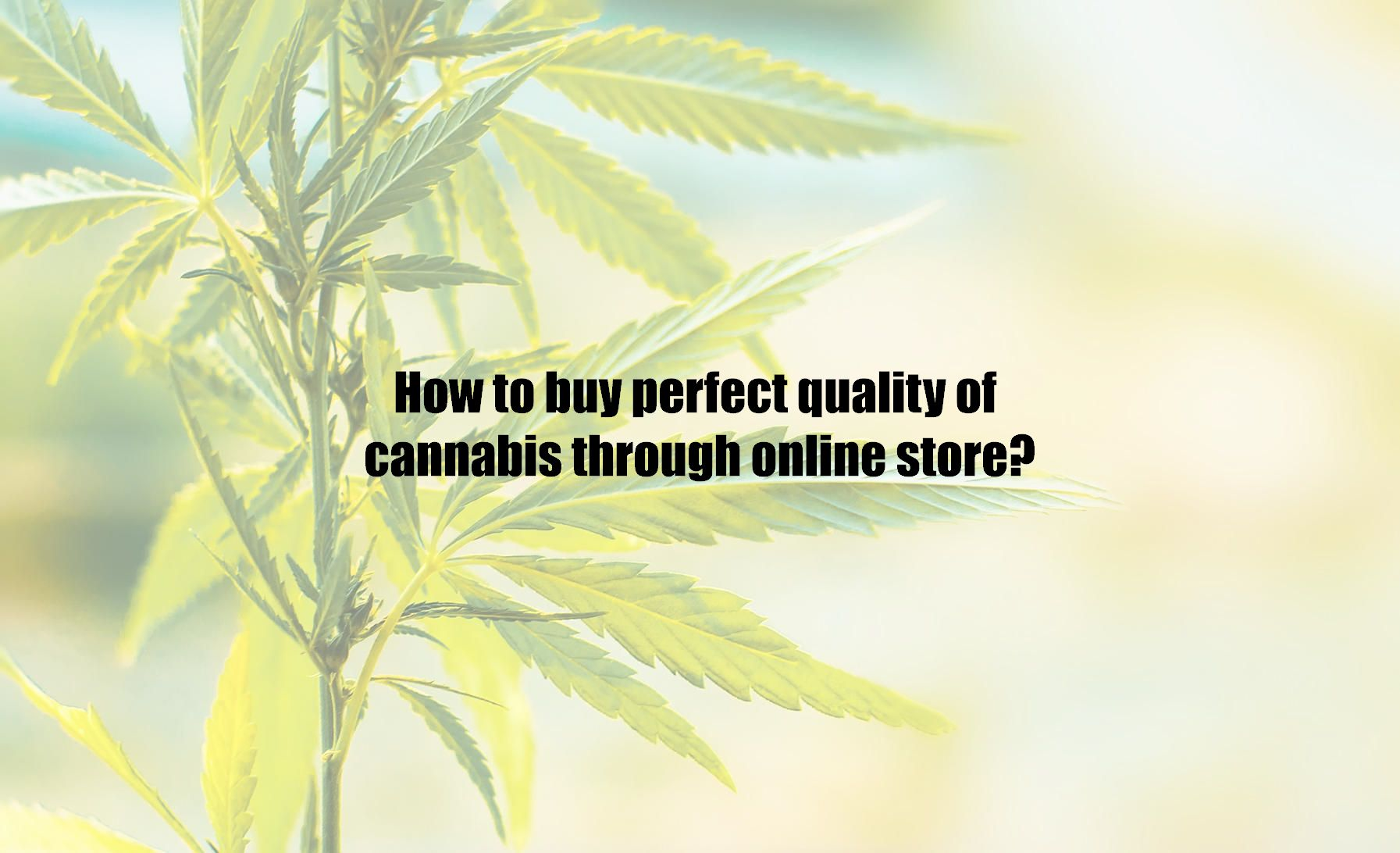 How to buy perfect quality of cannabis through online store?